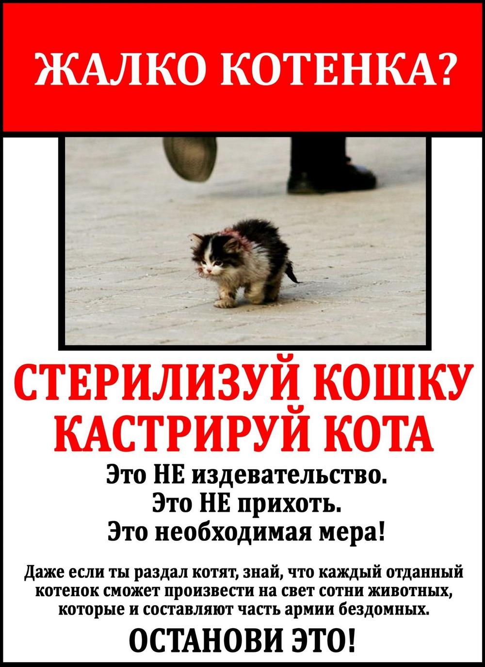 Бесплатная кастрация кошек в спб 28 февраля